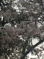 '16花見_2016/03/27